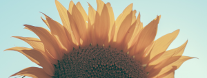 Close-up photo of a sunflower, with a blue filter applied. Hope. Joy. Healing. Postpartum Wellness Counseling and Therapy Services | Washington D.C. and Northern Virginia